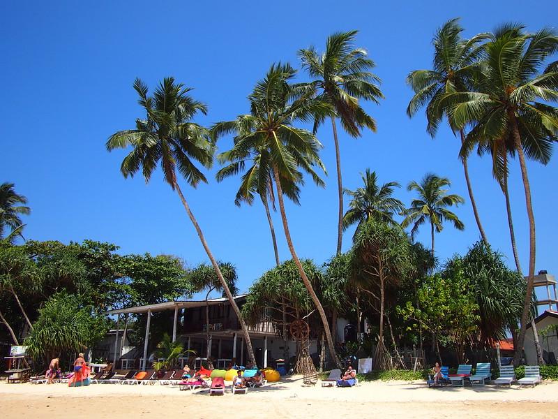 P2219080-coconut-trees.JPG