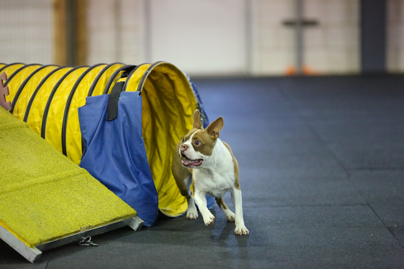 dogs_06142016-79.jpg