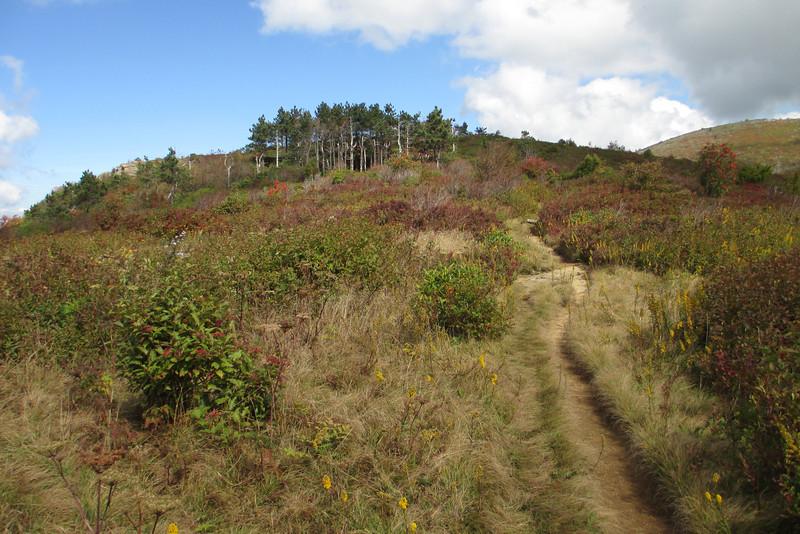 Art Loeb Trail -- 5,760'