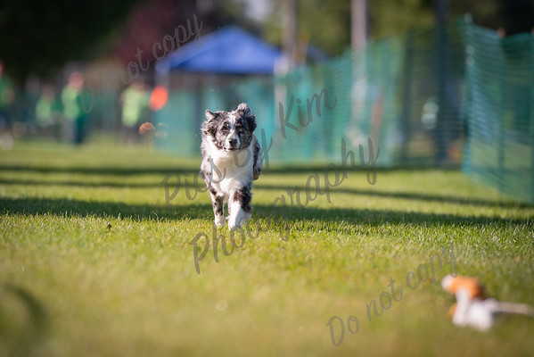 Janesville Beloit Kennel Club