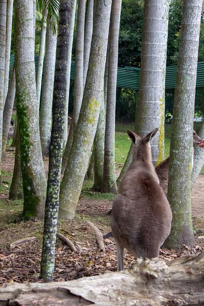 Australia_193.jpg