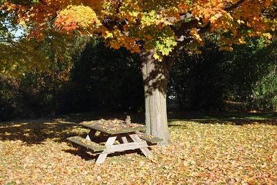 Fall Colors 2008