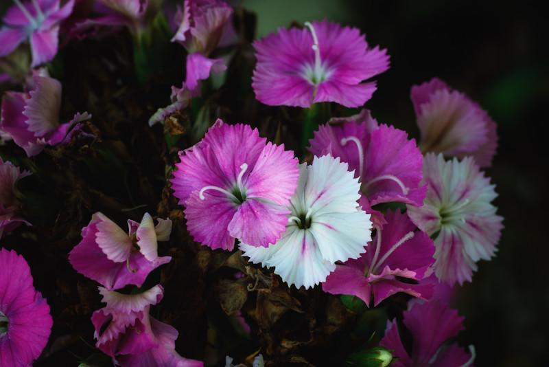 flowers 121214-.jpg