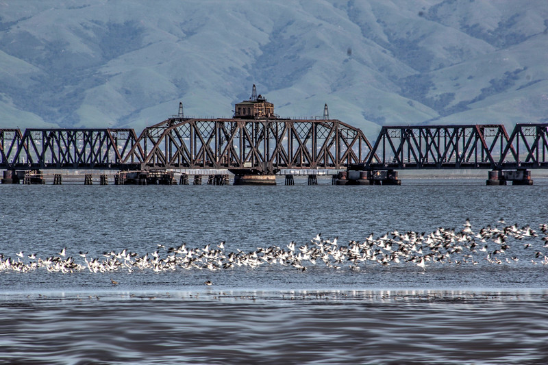 Old Dumbarton Railroad Bridge with birds
