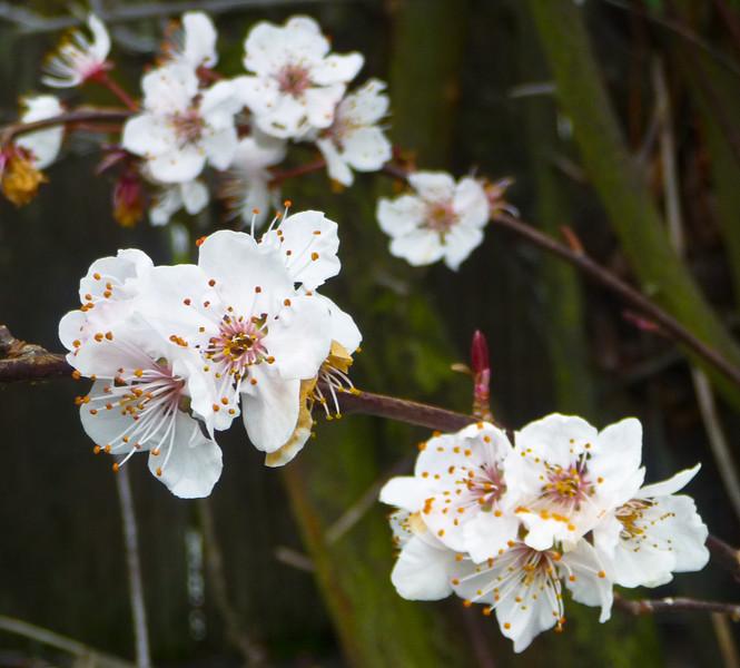 spring flowers-1000738.jpg