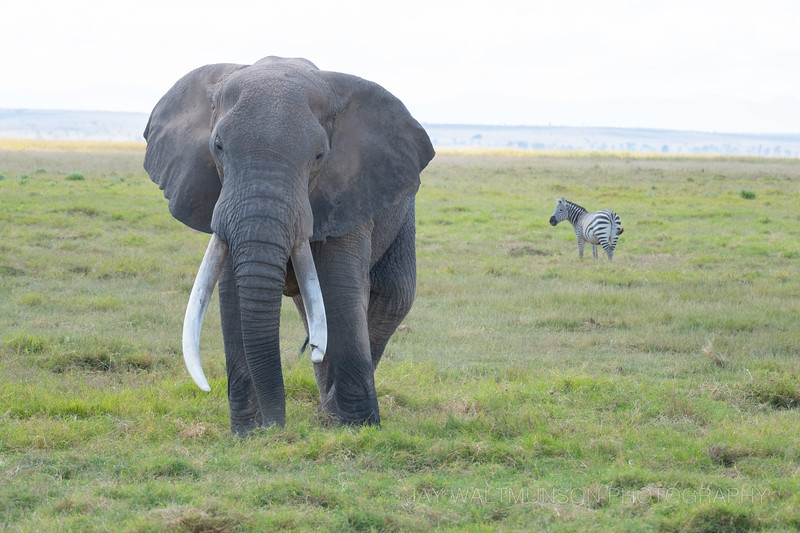 Jay Waltmunson Photography - Kenya 2019 - 153 - (DSCF4299).jpg