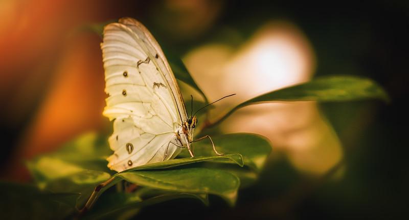 Butterfly-026.jpg