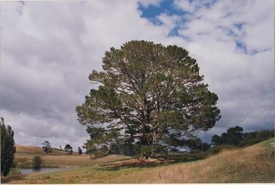 New Zealand 2005