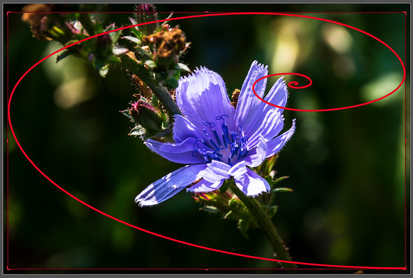 Golden Spiral Crop Overlay for the Crop and Straighten Tool in Adobe ® Lightroom  Customizing the Grid Overlay