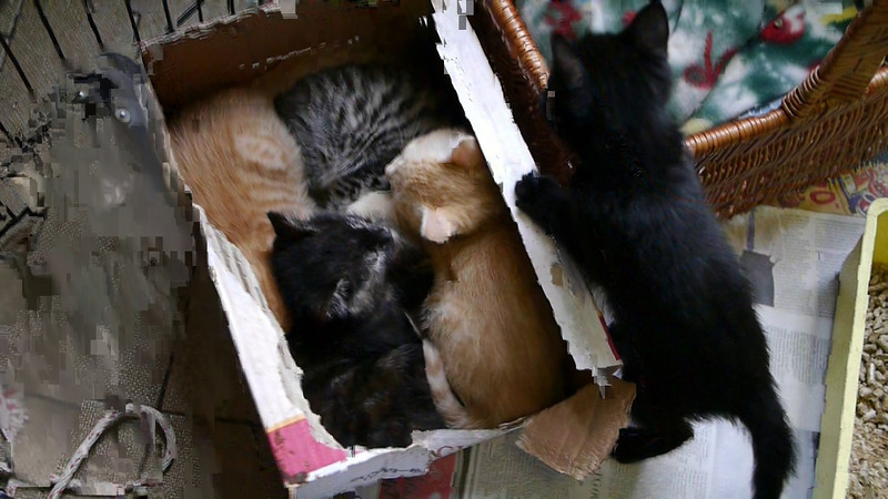 All the Kittens sleeping in the box. One of them wasn't tired though.