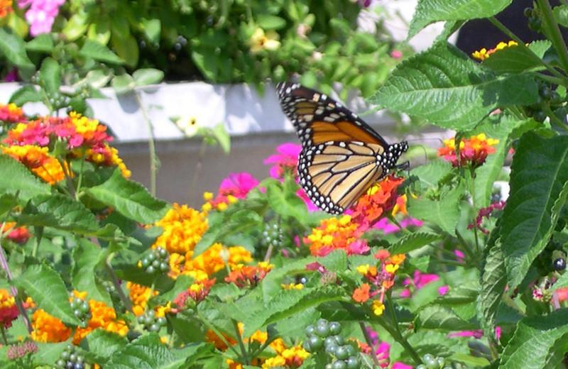 monarch428.jpg