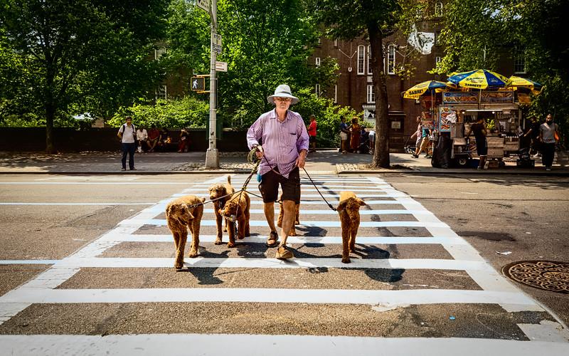 Dogs NYC-2.jpg