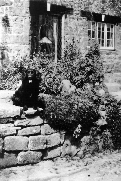 Cottage gardens 1940`s with dog and lamb.