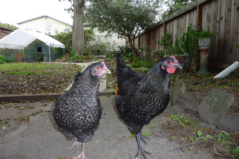 Maybelline Marans and Myrna Lorp - steppin' out