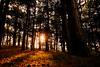Forrest sunset | Zonsondergang in het bos