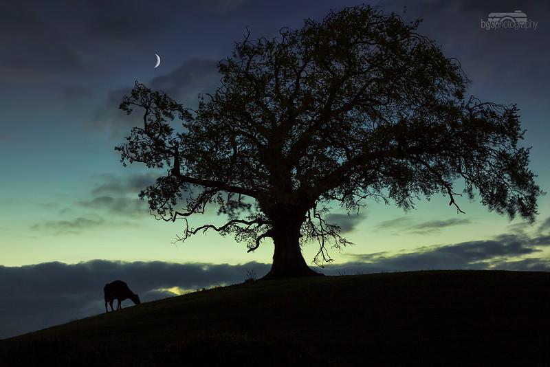 The three of night