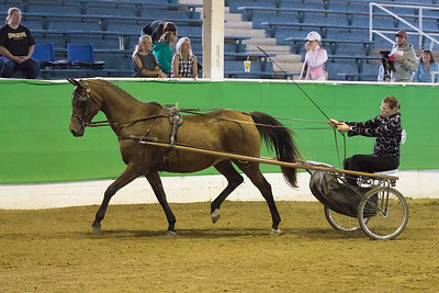 164 - Reg. Arabian/Half Arabian Pleasure Driving Stake