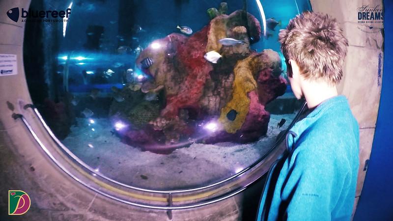 Blue Reef.00_25_22_08.Still040.jpg