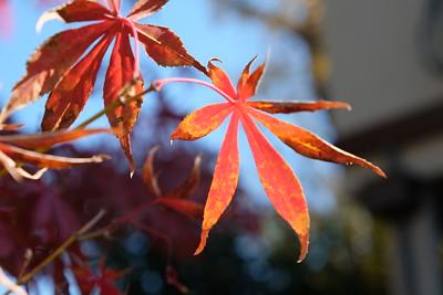 Fall in Menlo 2015