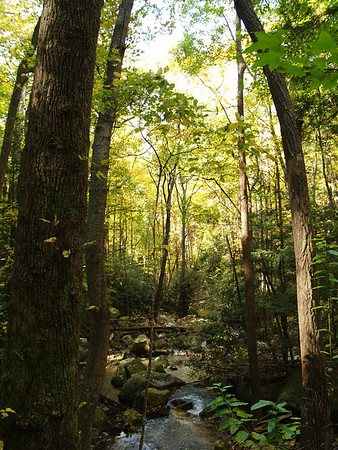 TN 2006 - Gee Creek Trail, Starr Mountain