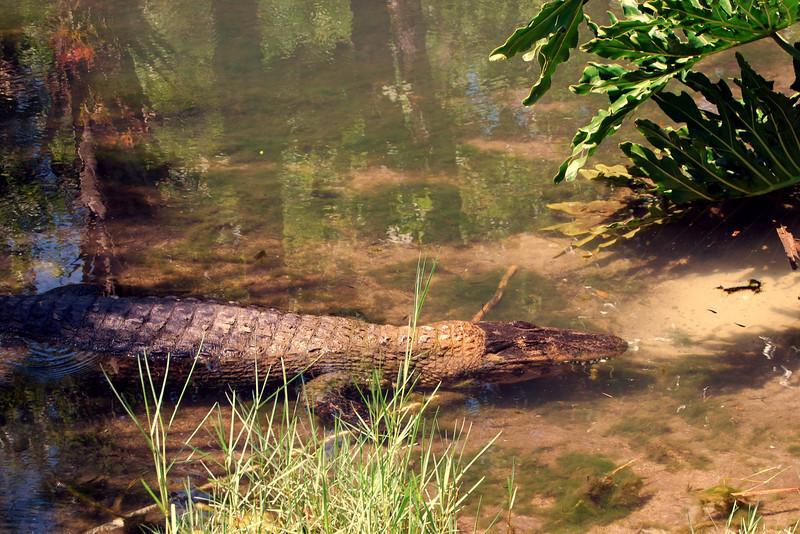 2014 Zoo in Sanford, Florida (6).JPG