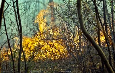 Summer 2001 Burn Scar