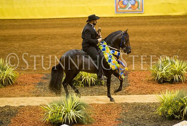 Fino Am Colt Stallion Championship