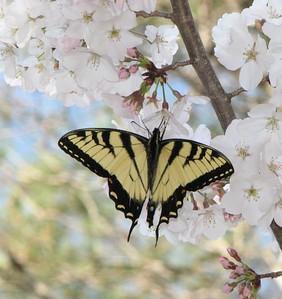 Butterflies 032208