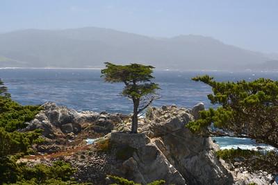Day 6: Santa Cruz to Morro Bay