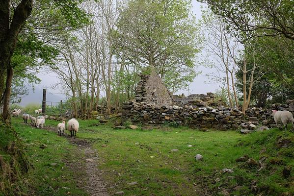 White O'Morn Cottage