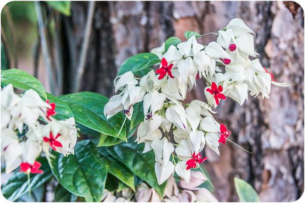 Iguazu Flora