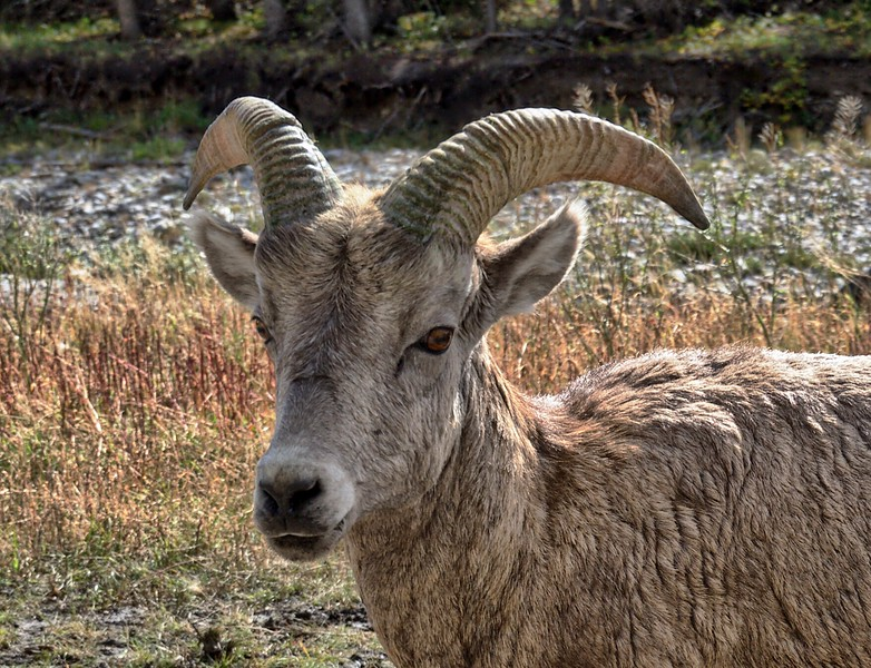 Here's Looking' at You, Kananaskis Country AB