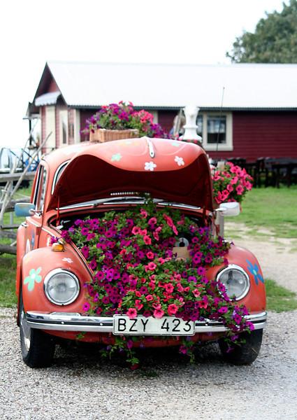 Gotland 20110608_0069.jpg