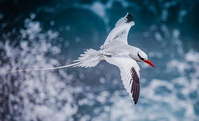 Birds Best