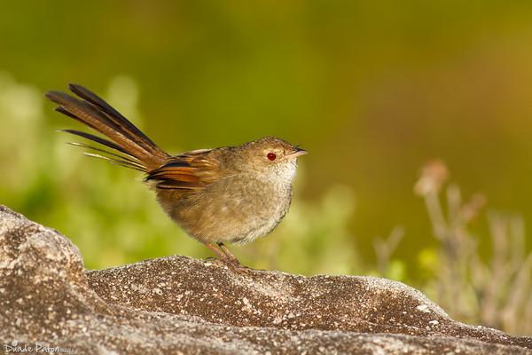 6 Fundamental Steps For Bird Photography