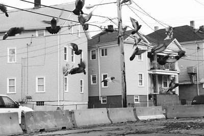 Neighborhoods & Architecture