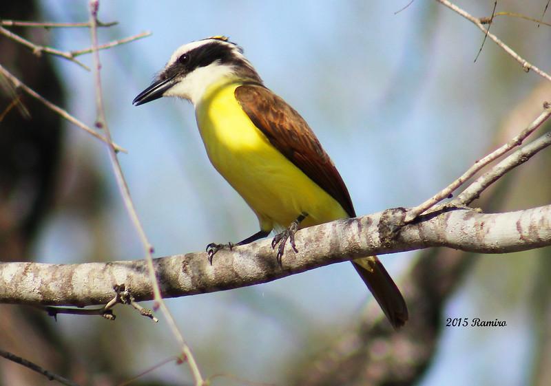 Bentsen Bird 1-16-15 321.jpg