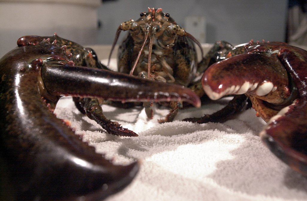 """. <p><b><a href=\'http://grist.org/climate-energy/claws-and-effect-climate-change-turns-lobsters-into-cannibals/\' target=\""""_blank\""""> 5. Lobsters </a></b> <p>Clawed creatures more likely to turn to cannibalism if they�re surrounded by drawn butter. (unranked) <p> --------------------------------------------   (Darren McCollester/Getty Images)"""