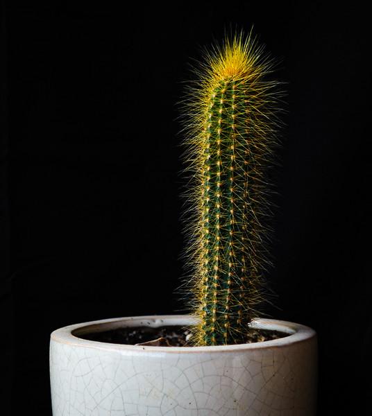 cactus-8812.jpg