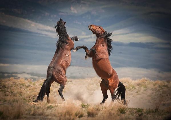 Onaqui wild horses 2021