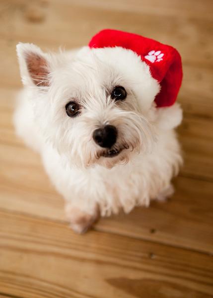 Fine - Merry Christmas