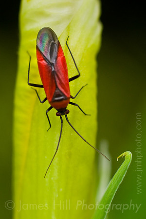 Bugs, Insects, and other Tiny Creatures.