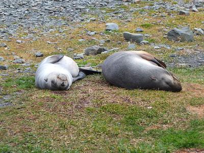 Grytviken & Prion Island