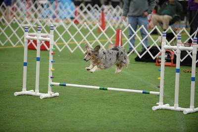 York County Dog Training Club AKC Agility Trial March  14-16