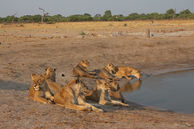 AFRICA trek - BOTSWANA &Beyond drive depart Chobe for second 2 nights Savute Camp Chobe National Park