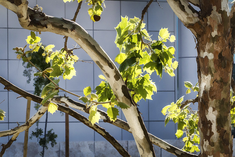 April 24 - Leaves.jpg