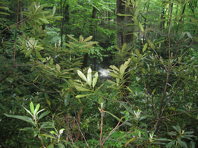 North Carolina - 2006