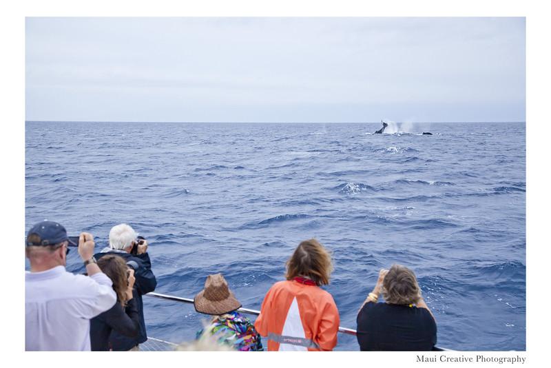 WhaleTales_2014_442.jpg