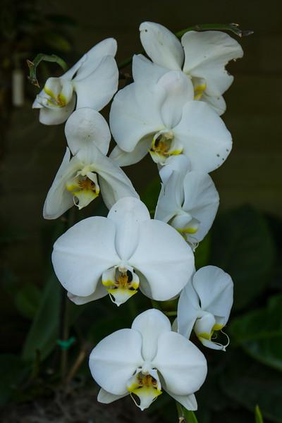 naples_botanical_garden_0048-LR.jpg