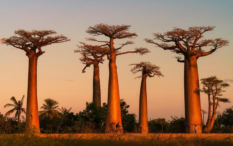 Baobab Beauty